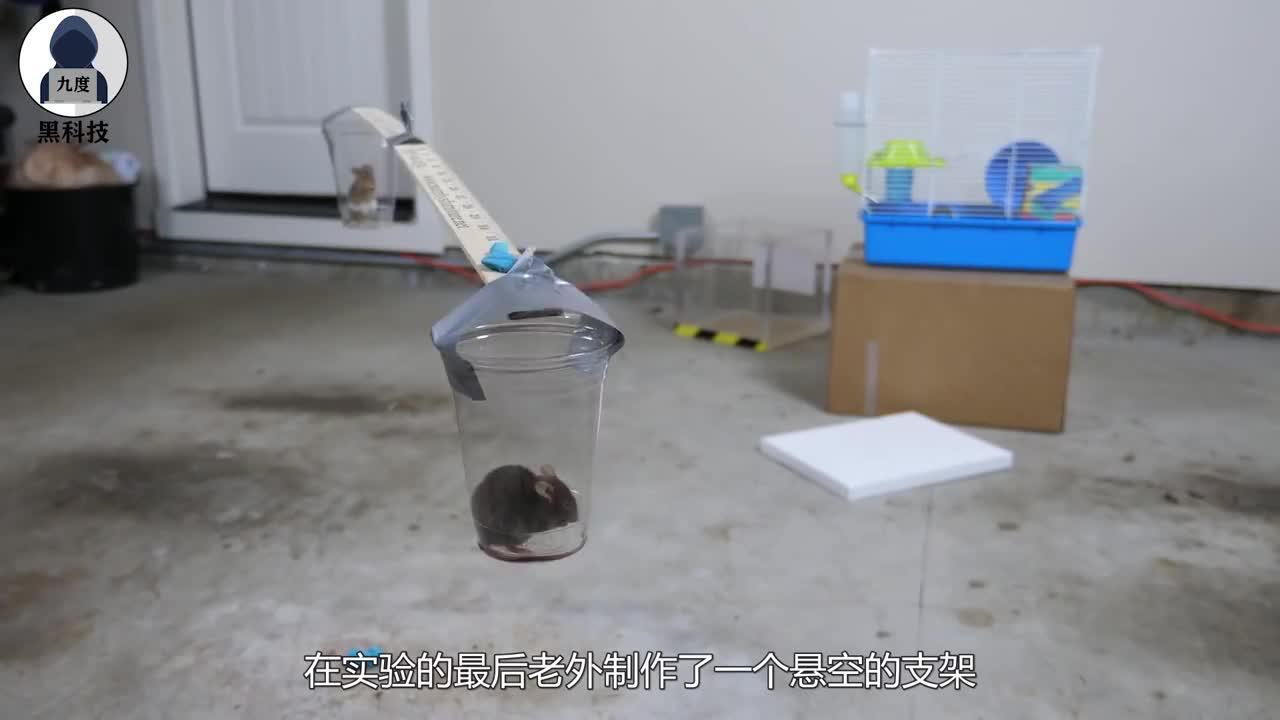 """价值800美元的""""磁王"""",靠近老鼠后会怎么样?有趣的科学现象!"""