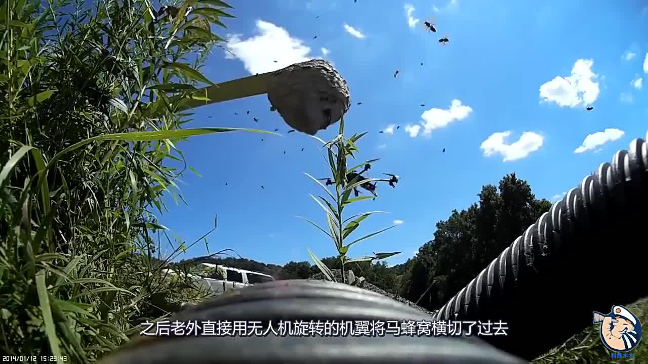 老外用无人机捅马蜂窝,镜头记下全过程,场面直接失控