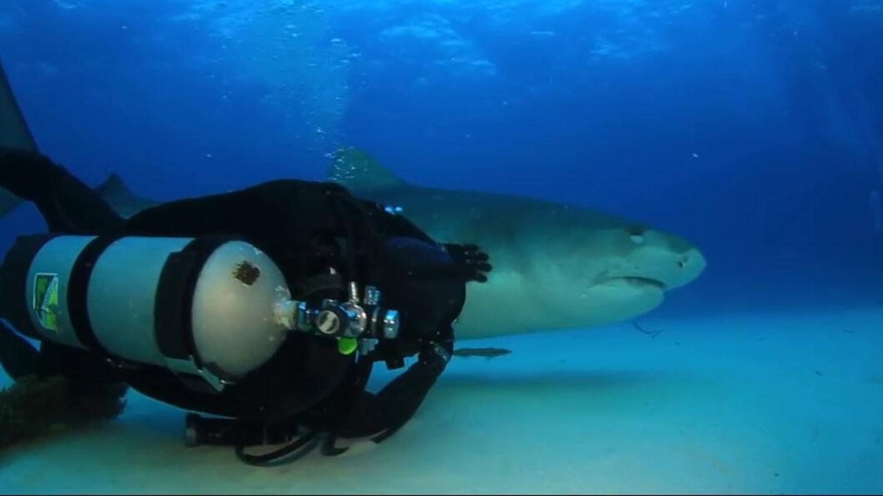 20年前拆鱼钩救了野生虎鲨一命 海洋生物学家从此和它成为好友