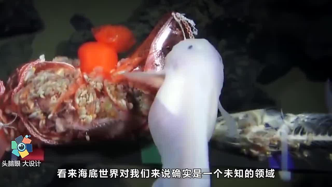 科学家在马里亚纳海沟八千米深处,到底发现了什么?看完大开眼界
