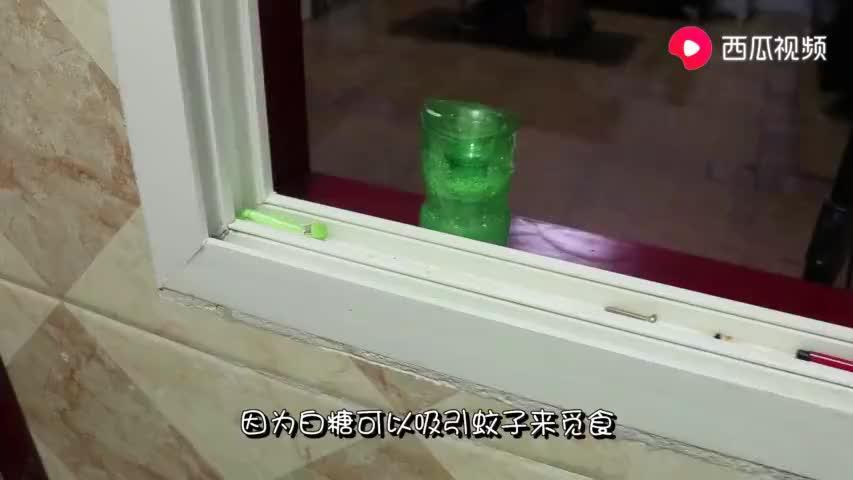 天热蚊子多?用一个塑料瓶加点小东西,蚊子轻松消灭