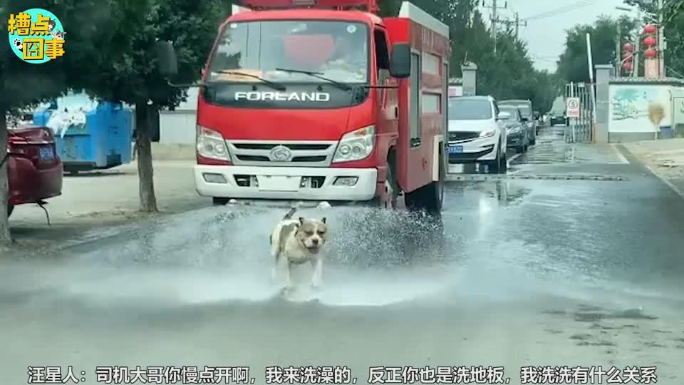 狗子让洒水车给你洗澡,你还真有牌面啊!