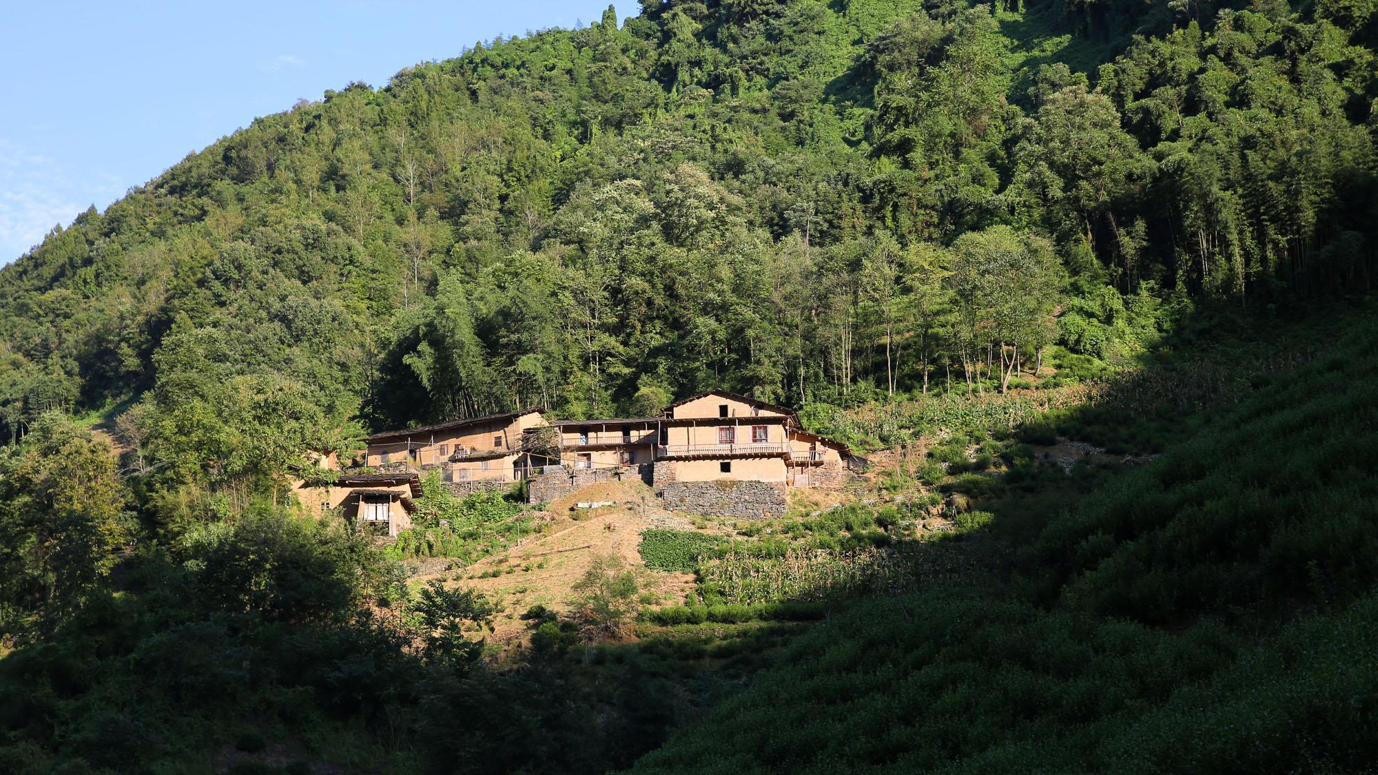 紫阳茶山上的石板房民居:绿色环抱,远看像山寨