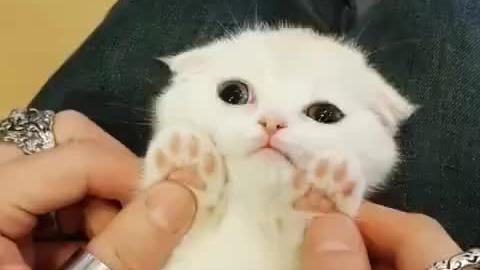 刚出生没有多久的小萌猫,小猫咪的爪子感觉就是美美哒
