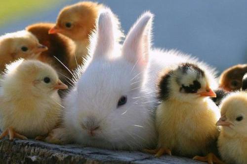 生肖兔:下周起财富进门,有望升职加薪,好运一直绕身不散