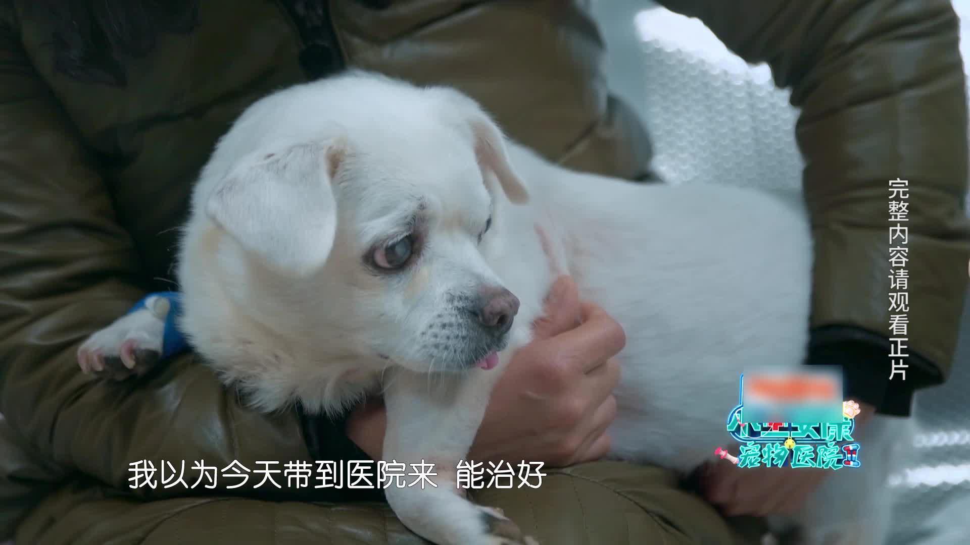 """【小主安康-宠物医院2】""""雪儿""""确诊骨癌"""