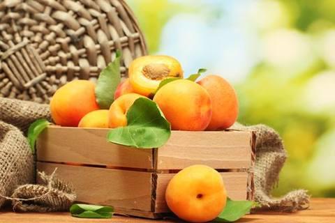 杏子是一味治疗咳嗽哮喘,降脂降压,美容养颜的良方。