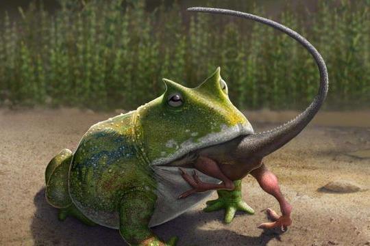 """生活在7000万年前的""""史前巨蛙""""魔鬼蛙,真的会吃恐龙吗?"""