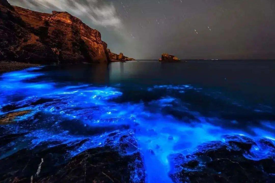 """单细胞生物""""甲藻""""是如何照亮海洋的?夜晚蓝色的光芒很是迷人!"""