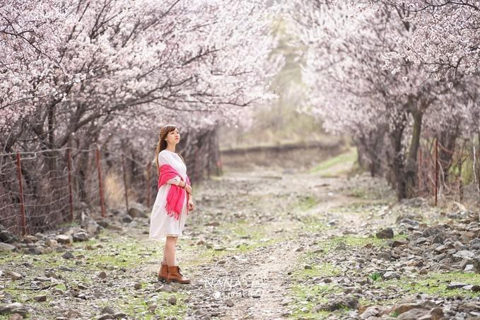 新疆新源的这条未名沟,杏花盛开的景致,四月最美的赏花之地