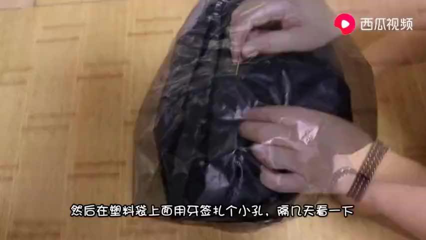 在花卉上套个塑料袋,解决了冬天养花的大难题,不知道的快看看!