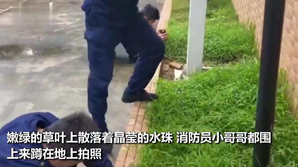 消防员小哥哥围成一圈蹲地上拍小草下一秒草原梦被一扫帚拍没了