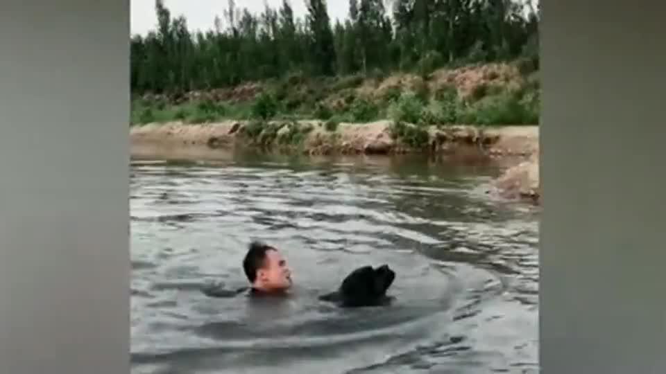看到主人落水,卡斯罗犬的反应让人大呼感动!