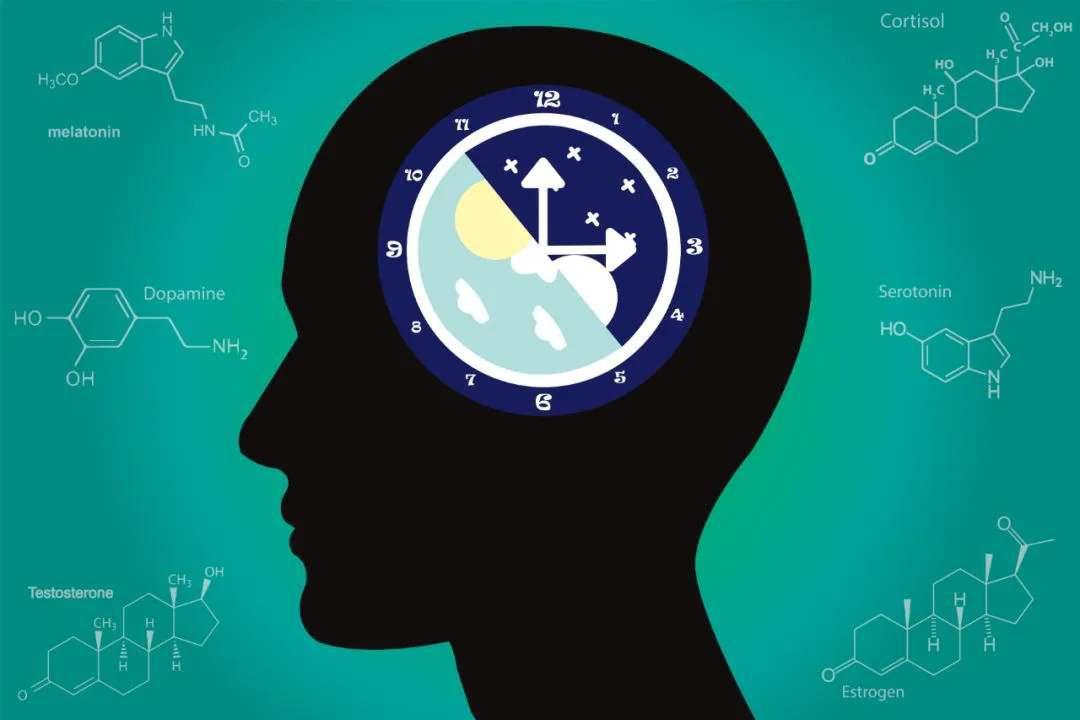 生物钟:调配身体,功能强大,还和DNA相关,重要至极!