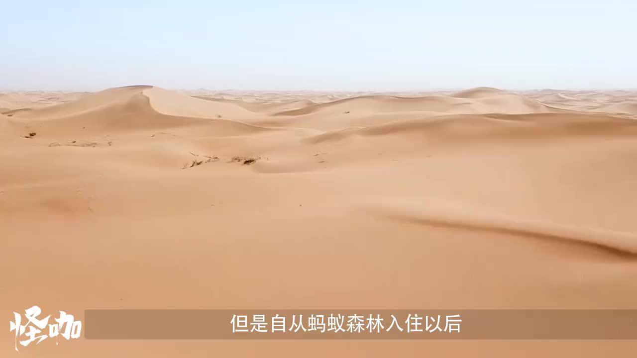 马云斥巨资在沙漠种树,如今三年过去,种成什么样了?