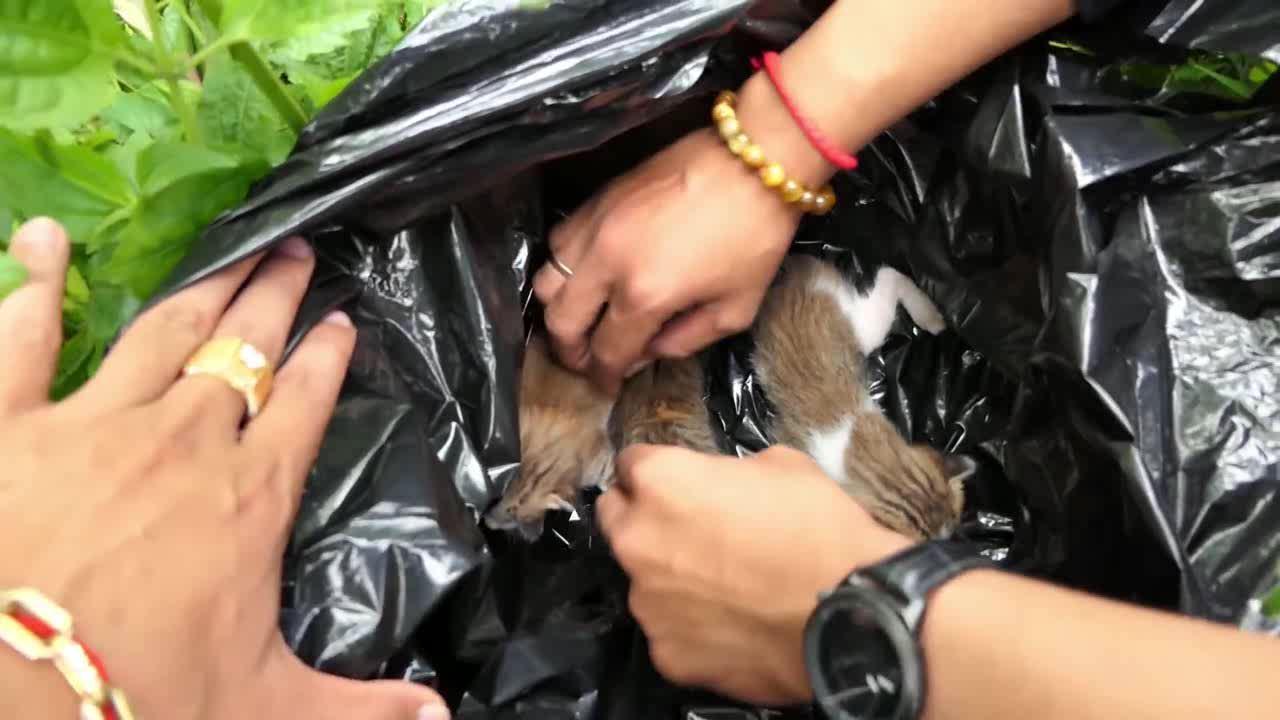嫌猫生太多,主人用塑料袋困住扔掉,被捂死瞬间遇上了好心人