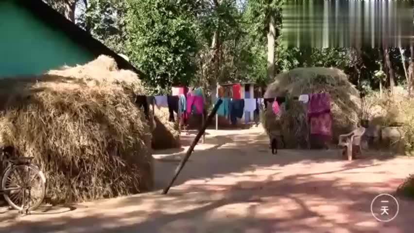 到印度,实拍印度农村女人的真实生活,干活方法很特别!
