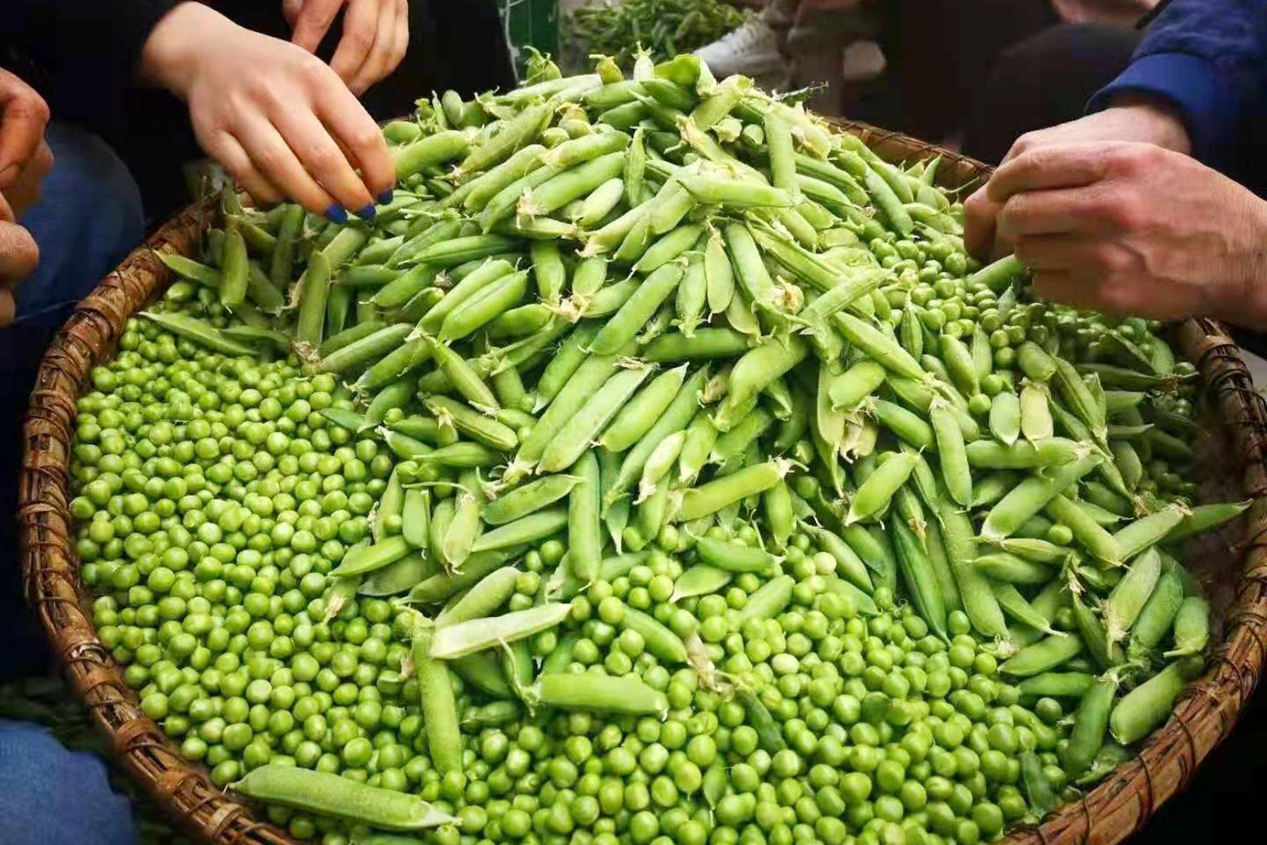 春天四川人最爱吃的一道菜,豌豆炒肉末,家里人吃过都说好吃!
