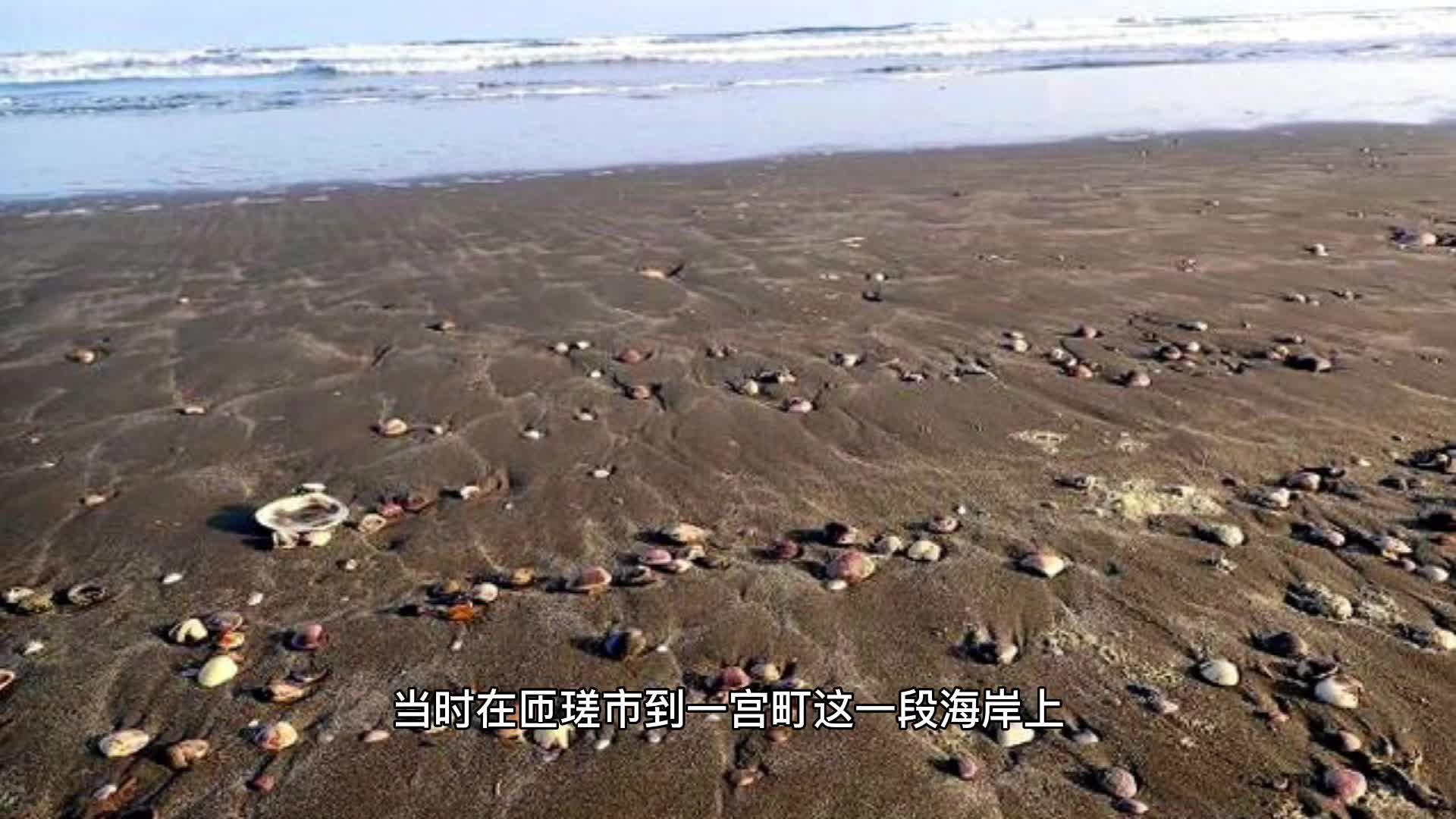 神奇!日本海边出现大量文蛤,民众不顾阻拦捡拾,有人联想到地震