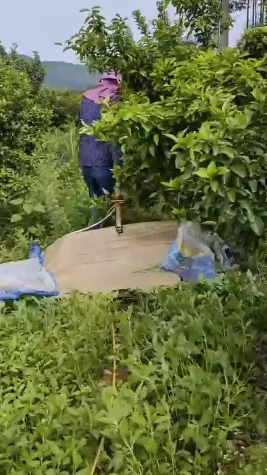 农民用自己设计的神器,给果园除草,十亩地一上午就完成!
