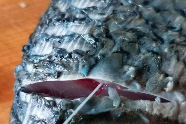 吃鲤鱼必学的小知识,学会了这个小技巧,做的鲤鱼鲜嫩没有土腥味