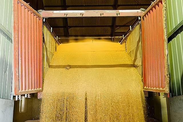 玉米价格稳中有涨,小麦价格小幅度下滑,春节前能回涨吗?