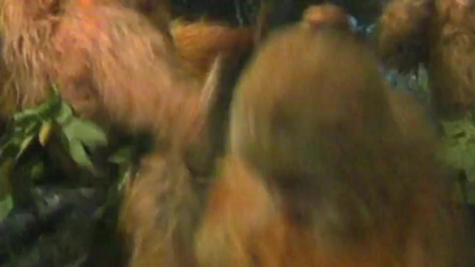 悟空不愿看到自己的小猴子们生老病死,启程去学习长生之术!