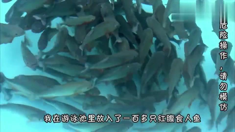 食人鱼真会吃人吗?把它们饿上几天后,他亲自跳进了鱼池!