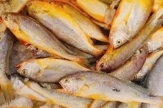 去海鲜市场,买这几种鱼,老板都对你竖起大拇指!营养高脂肪低