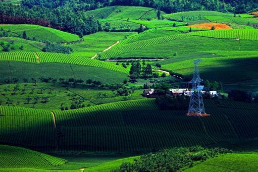 贵州地标产品将达137个 金字招牌助农业产业化进程提速