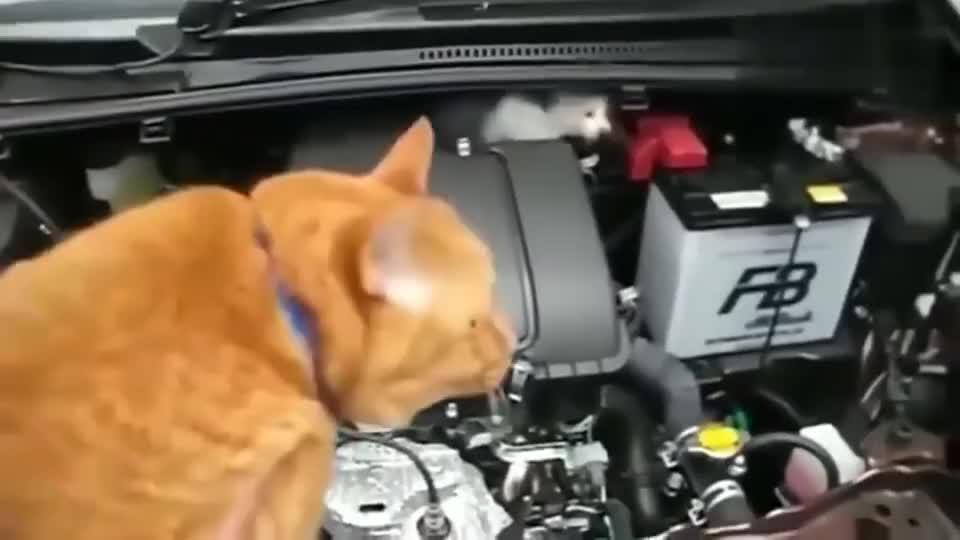在引擎盖里发现只小猫咪,怎么都哄不出来,最后请出了橘猫!