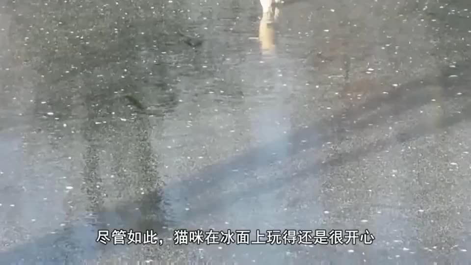 猫咪和鸡在结冰湖面上约架,真是神走位,原谅我忍不住笑了