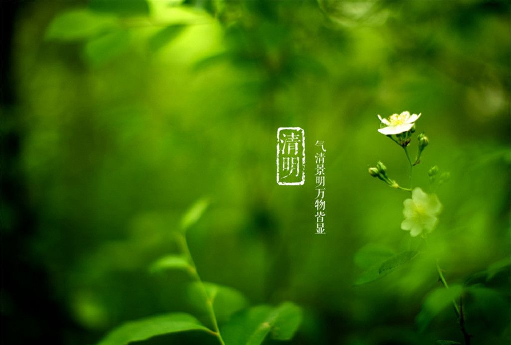 绿色护眼清明节清新唯美高清桌面壁纸