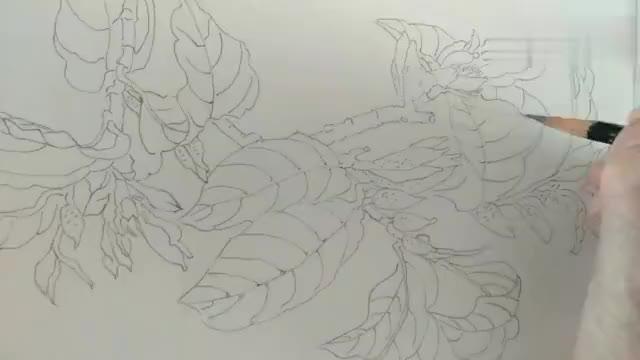 白描线条是工笔画的主要内容之一铅笔定稿。