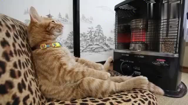 天气渐凉,主人为喵星人准备了一台小暖气