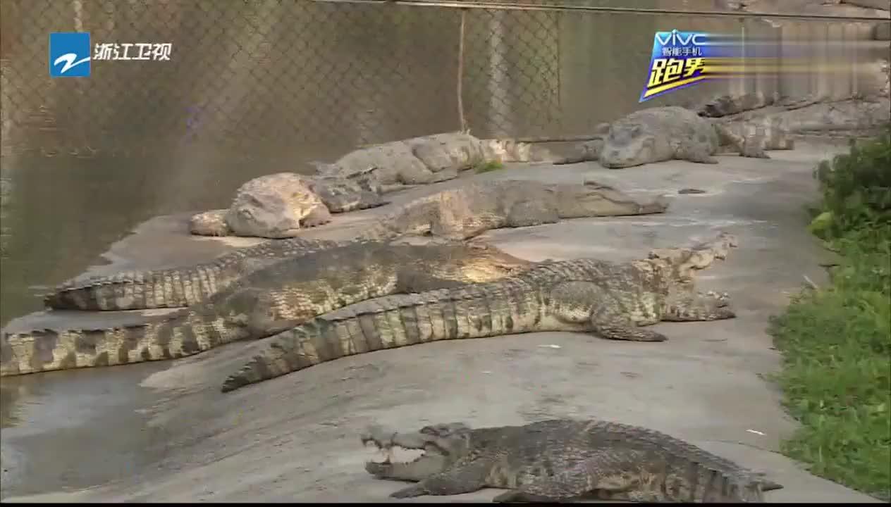 跑男来了2:跑男团被告知线索在鳄鱼嘴里,要把导演推下去喂鳄鱼