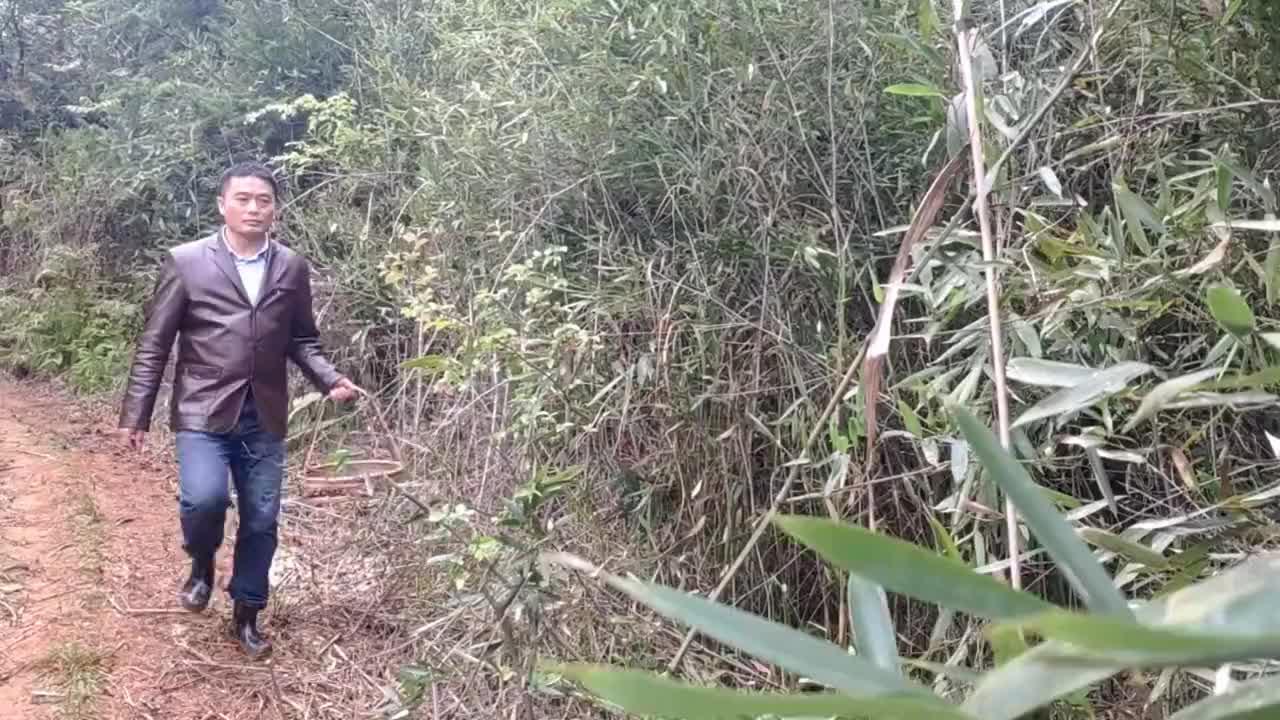 大明想将荒田开垦种粮食却发现地里的竹笋长成了片拔得真过瘾