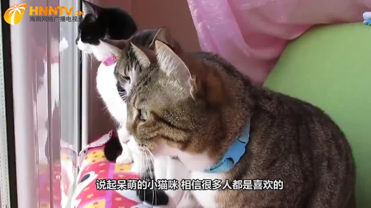 主人长期和猫咪一起睡,偶然一次查看卧室监控,发现了诡异的一幕