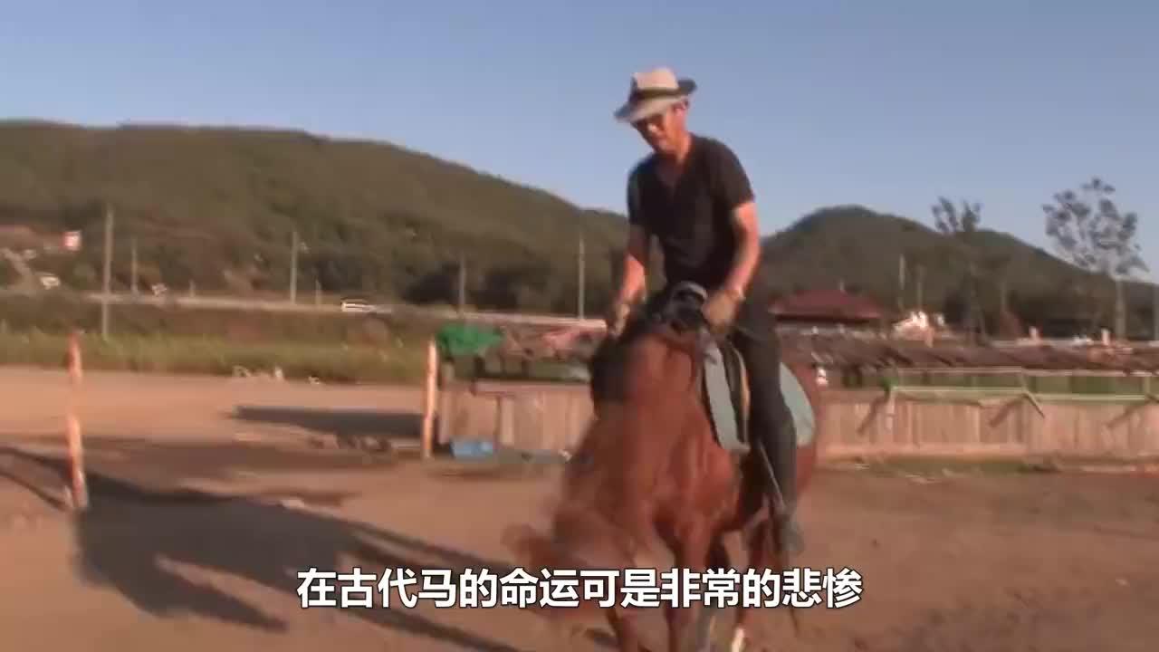 女主人给马儿刷毛,刷着刷着马儿就不正经了,镜头记录精彩一幕!