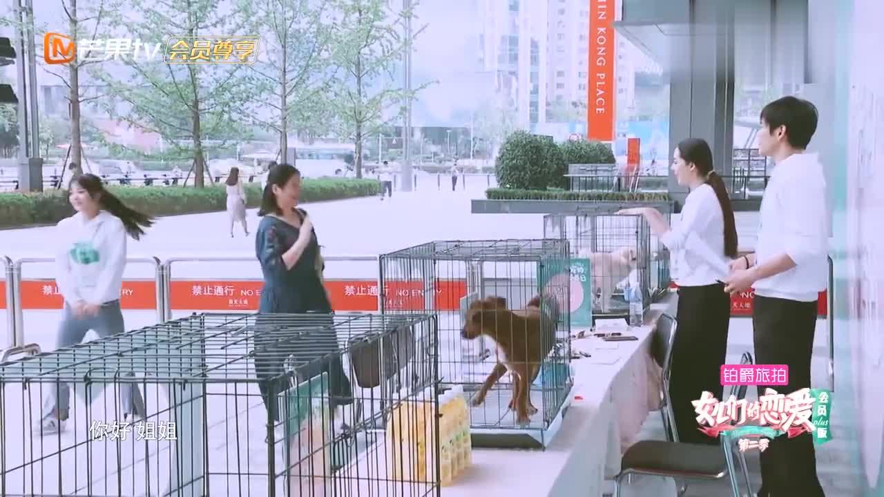 郭碧婷为流浪狗做公益,大妈对狗毛过敏还坚持养,被向佐拒绝!