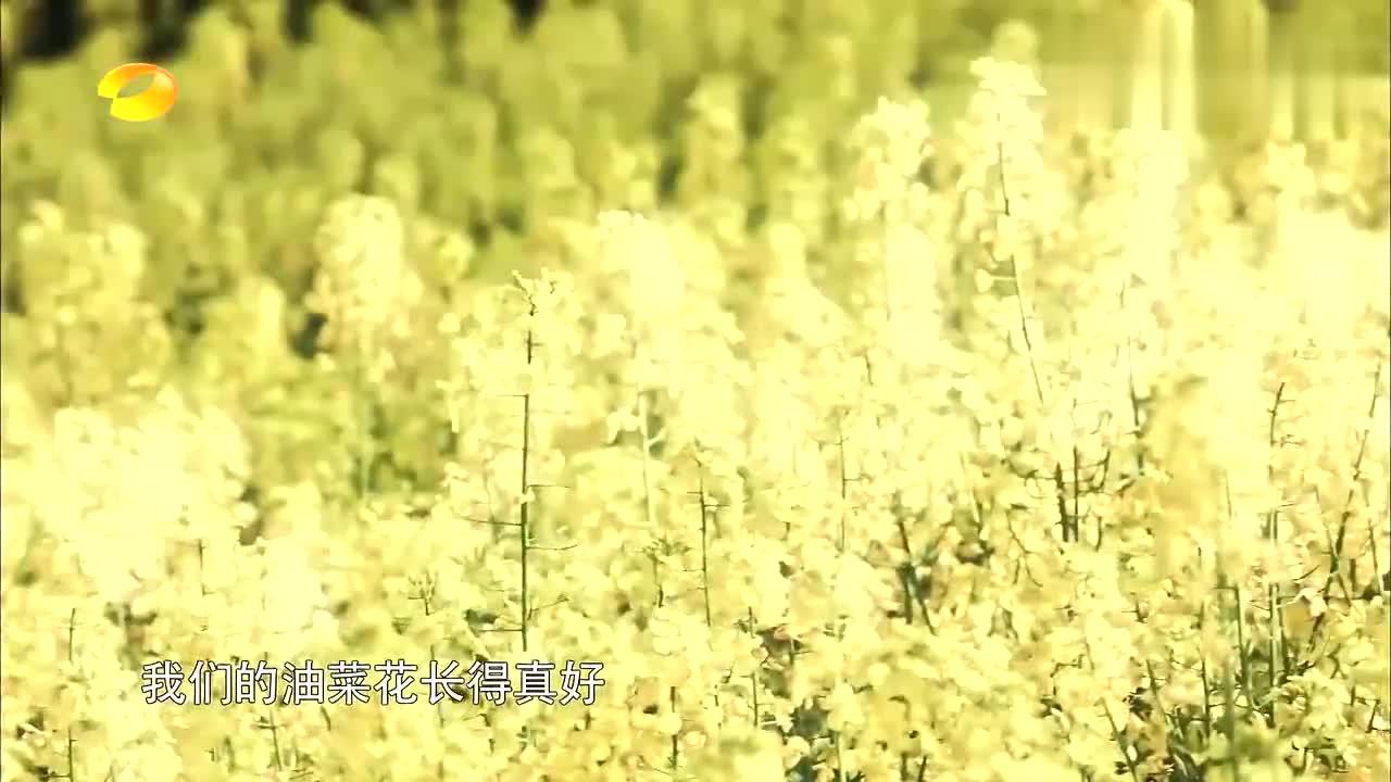 向往:何炅黄磊榨油菜籽长见识,彭昱畅大华默契合唱,告别乡亲!