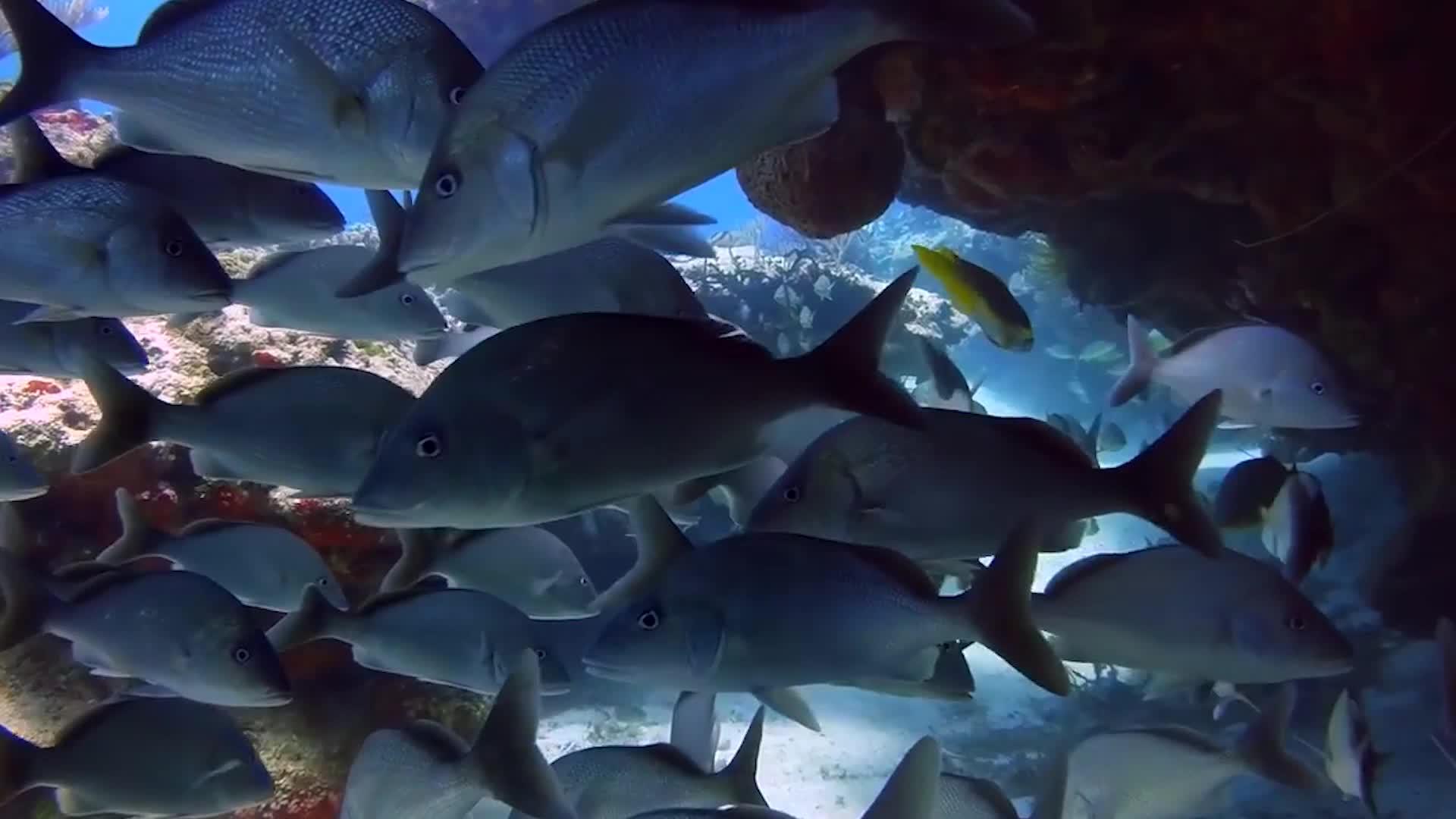 把淡水鱼放进海水中,鱼会怎么样?跟随镜头来看一看
