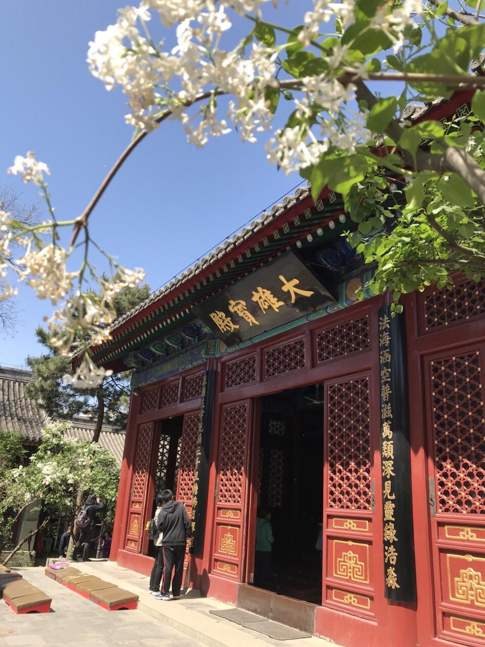 游览 北京市 西城区 法源寺