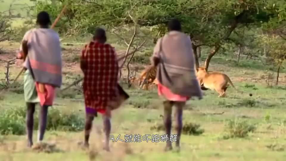 """3人就能吓跑狮群,成年礼是猎杀一头狮子,""""马赛人""""有多厉害?"""