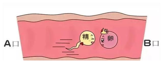 输卵管堵塞了就无法怀孕吗?想生宝宝怎么办?