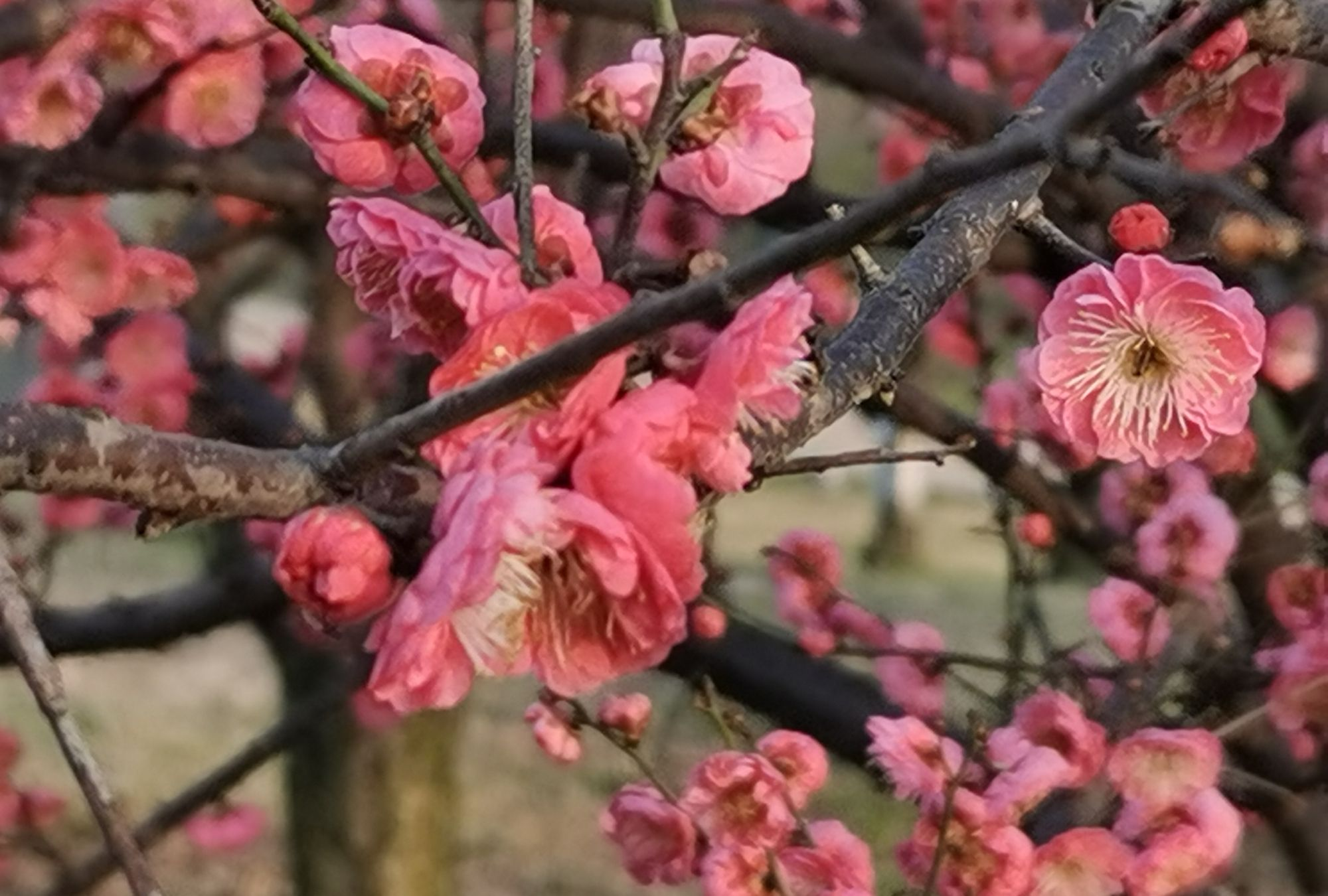 航成了:都桂溪公园,春花绽放