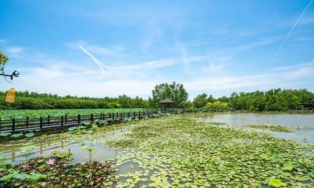 广东省最美湿地之南沙湿地公园!亲子游打卡景点