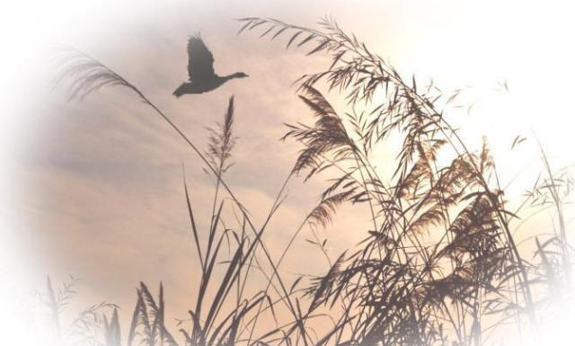 诗人笔下最诗意的秋天,颔联十个字尤其出色,能读出王维的境界
