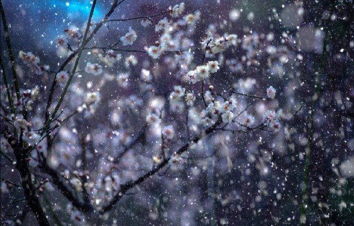 白雪舞新梅,飞鸟衔春归
