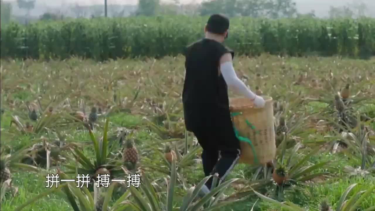汪苏泷宋威龙做客蘑菇屋,为自己点的菜买单,摘够300个菠萝